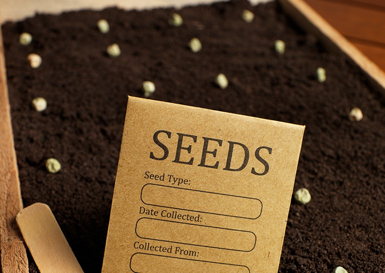 Plant Seeds